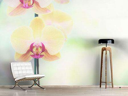 Wandbespannung Lovely Orchidee